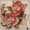 Корейская роза
