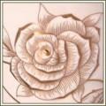 София Золотая роза