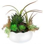Декоративные цветы Суккуленты в керамической вазе